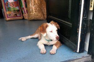 Temadag om græske gadehunde @ Byens Dyrefoder
